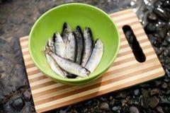 Fresh catch of fish Stock Image