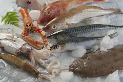Fresh catch of fish. And other seafood Royalty Free Stock Photos