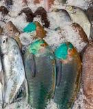 Fresh catch of Marine fish Royalty Free Stock Image