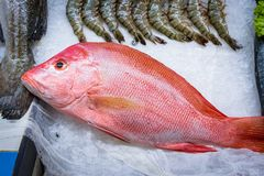 Fresh red snapper fish on ice at food product market 1. Fresh catch of red snapper on ice at food product market Royalty Free Stock Image