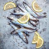 Fresh catch Shishamo fish fully eggs flat lay on shabby metal ba Royalty Free Stock Photo