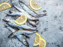 Fresh catch Shishamo fish fully eggs flat lay on shabby metal ba Stock Images