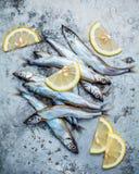 Fresh catch Shishamo fish fully eggs flat lay on shabby metal ba Stock Photos