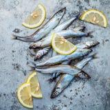 Fresh catch Shishamo fish fully eggs flat lay on shabby metal ba Royalty Free Stock Photos
