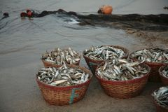 Wicker baskets with fresh fish Royalty Free Stock Photos