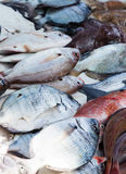 Fresh catched fishes displayed on fish market in Essaouira, Moro Stock Photo