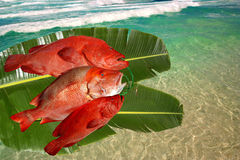 Fresh catched fishes, red snappers, banana leaves  Royalty Free Stock Photo