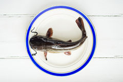Fresh catfish fish on plate Royalty Free Stock Image