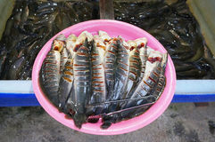 Fresh Catfish fish that were cut for sale Royalty Free Stock Images