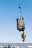 Fresh caught Alaskan halibut Stock Photo