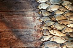 Caught carp fish on wood. Catching freshwater fish on wood background. A lot of bream fish, crucian or roach on natural. Fresh caught carp fish on wood. Catching Royalty Free Stock Photos