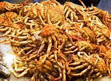 Fresh-caught crabs, photographed in fish market Royalty Free Stock Photo