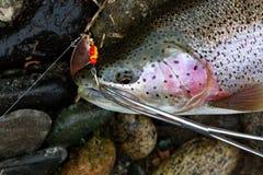 Fresh caught fish Stock Images