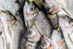 Fresh Caught Fish Closeup Stock Photography