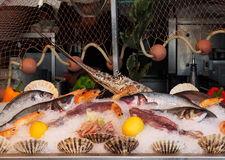Fresh Caught Fish On Display At Restaurant Royalty Free Stock Photo