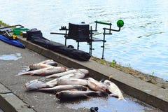 Fresh caught fish Stock Photography