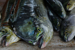 Fresh caught fish. This foto of a fresh caught fish I made on a market in Khao Lak (Thailand Stock Photo