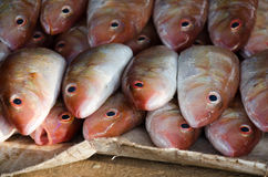 Fresh caught fish 02. This foto of fresh caught fish was taken on a market in Khao Lak (Thailand Royalty Free Stock Images