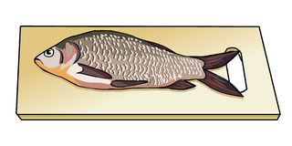 Fresh caught fish on wooden cutting board. Sea fish. River fish. Shoe scales. Preparation of fish. Cookery. Vector. Royalty Free Stock Photography