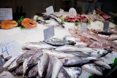 Fresh-caught sea fish Stock Image