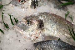 Fresh-caught sea fish Stock Photography