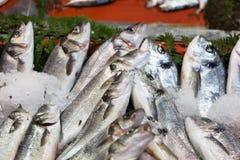 Fresh-caught sea fish Stock Photos
