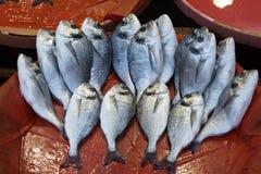 Fresh-caught sea fish Stock Photo