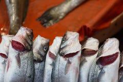 Fresh-caught sea fish Royalty Free Stock Image