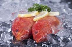 Fresh caught Strawberry grouper on ice with some s Stock Photo