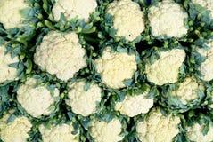 Fresh cauliflower Stock Photography