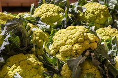 Fresh cauliflower Royalty Free Stock Image