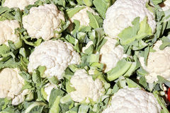 Fresh Cauliflower in a Market. The close-up of white cauliflower in vegetables market at sunny summer day. Healthy organic food. Suitable for an abstract Stock Images