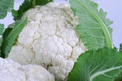 Fresh Cauliflower Vegetable Royalty Free Stock Photos