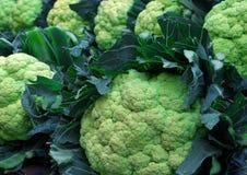 Fresh cauliflowers Stock Image