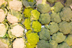 Fresh cauliflowers on the market stand Stock Images