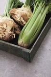 Fresh celeriac celery Royalty Free Stock Images