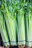 Fresh celery Stock Photography