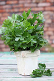 Fresh Celery Stock Images