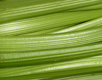 Fresh celery Royalty Free Stock Images