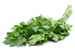 Fresh celery herb Stock Photo
