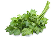 Fresh celery herb Royalty Free Stock Photos