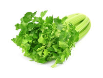 Fresh celery Royalty Free Stock Photo