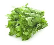 Fresh celery an isolated on white background stock image