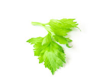 Fresh celery leaf vegetable on white background, healthy food co Stock Photos