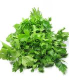 Fresh celery leaves Royalty Free Stock Photos