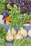 Fresh celery and other herbs at the market Stock Images