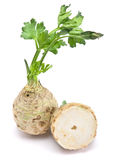 Fresh celery with root Royalty Free Stock Image