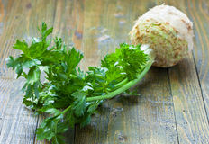 Fresh celery with root Stock Image