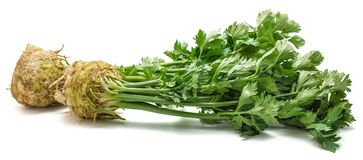 Celery. Fresh celery root with leaves  on white background two bulbs closeupn Royalty Free Stock Image