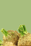 Fresh celery roots with some foliage Royalty Free Stock Images